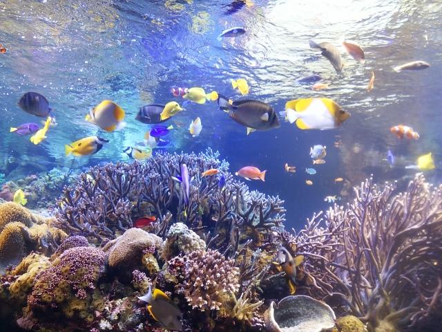 おっとっとの海の生き物は何種類?スマホを使って生き物を集めよう